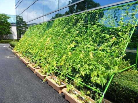 Kyocera Green Curtain