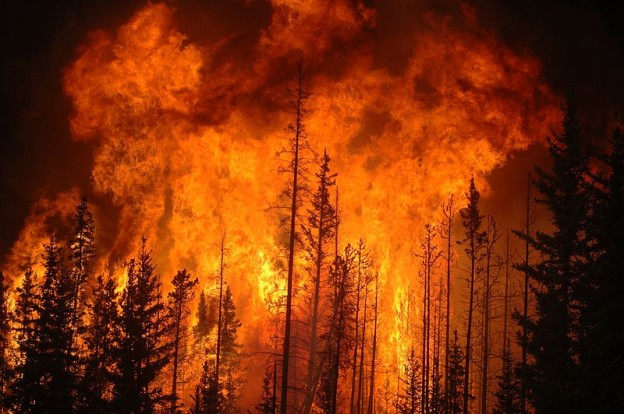 Old Growth Fire