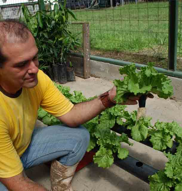 Benefits of Hydroponic Vegetable Gardens