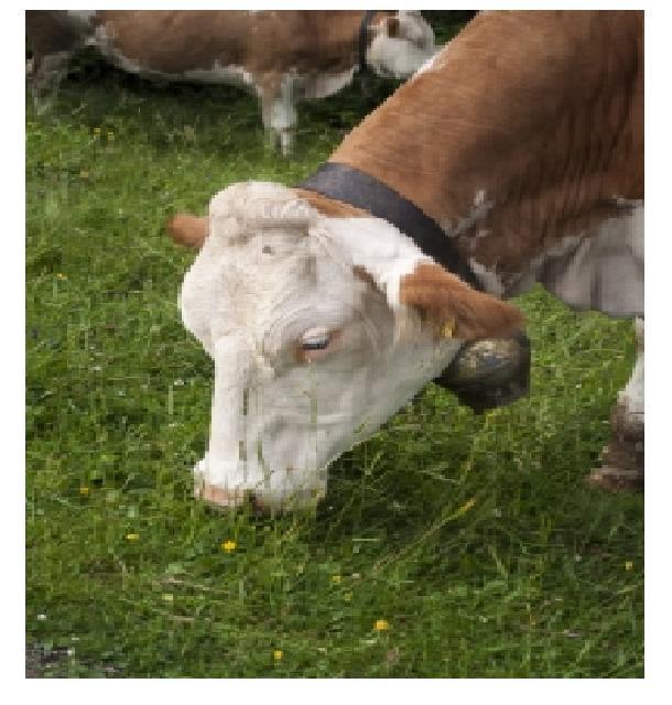 GMO Beef